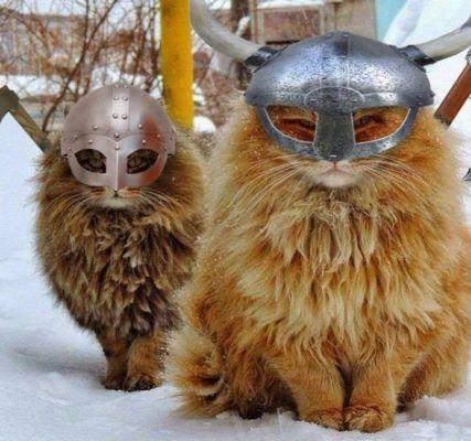 Боевые коты викингов
